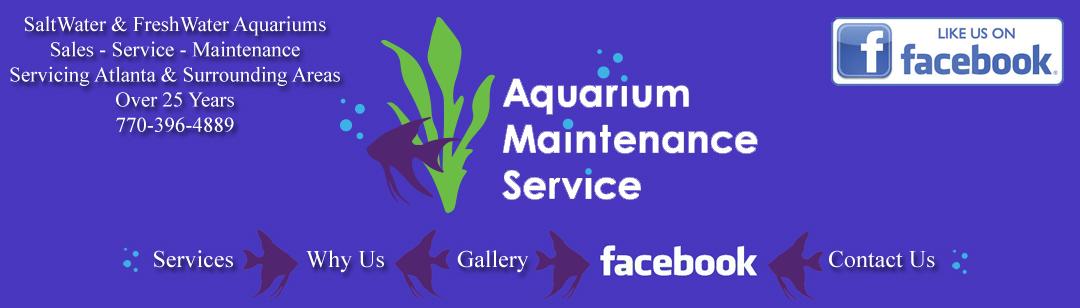 aquarium sales maintenance atlanta